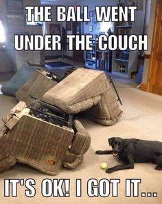 Corgi Funny, Funny Dog Memes, Funny Animal Videos, Funny Animal Pictures, Funny Dogs, Cute Dogs, Cute Animal Memes, Funny Animal Quotes, Dog Quotes