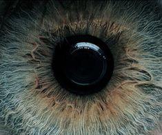 Exquisite Eye macro