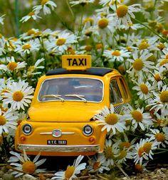 Miniature Photography, Adventure, Instagram, Vw, Cars, Flower, Decor, Daisies, Beautiful Images