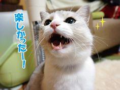 感動の再会とその後の猫ら |うにオフィシャルブログ「うにの秘密基地」Powered by Ameba
