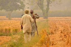 Punjab Farming