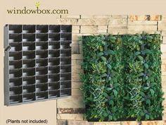 A valódi zöldfalak elkészítése speciális szaktudást és eljárást igényel, de kis csalással saját, majdnem tökéletes zöldfalunk is lehet. Az ilyen rézsűs fakkokból álló állványrendszerbe lombosabb díszövényeket ültessünk, az eredmény pedig egybefüggő növényfüggöny lesz!