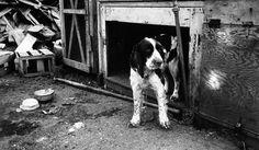 飼養を放棄した飼い主2019年まで動物の飼養を禁じられる英国