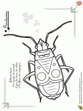 Coloriage les petites bêtes Line Drawing, Drawing Sketches, Drawings, Insect Coloring Pages, Spiders And Snakes, Cool Bugs, Bug Art, Doodle Art Journals, Kids Class