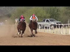 HORSE     RACES     SHOW Sports Picks, Horse Racing, Cow, Horses, Youtube, Animals, Videos, Animales, Animaux