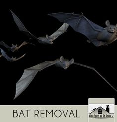Bat removal service http://www.kudzu.com/m/Atlanta-Squirrel-and-Rat-RemovalLLC-13286633