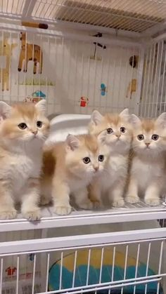 Funny Cat Videos, Funny Cats, Baby Animals, Funny Animals, Super Cat, Cat Gif, Cats And Kittens, Cat Lovers, Cute