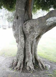 Tree Sex | You Got to be Kidding's Blog