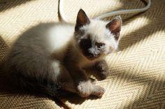 Kitten & sun puddle