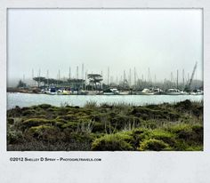 Moss Landing CA Excursion