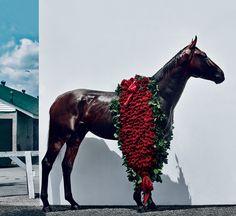www.horsealot.com, the equestrian social network for riders | Horseracing : American Pharoah.