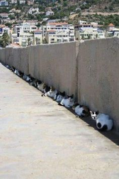 Cats in the shade.