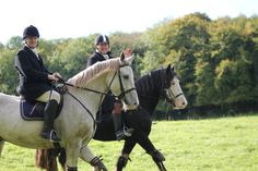 Freddy and All That Jazz out hunting with the Galway Blazers, Ireland Oct 15th 2016. VIDEO: https://www.youtube.com/watch?v=1ewqYxrqxHE #loveirishhorses