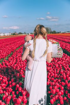 Tulip Fields and Windmills in Holland (Barefoot Blonde)