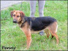Penny (Mayo 2011) Un poco tímida al principio, pero cuando te conoce  es muy cariñosa, mimosa y buenísima, Pasea muy bien. Sociable con otros perros.