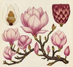 Polinización y polinizadores. Estructura y desarrollo de las plantas, desde plantas vivaces y bulbos hasta plantas tropicales. Vida veg...