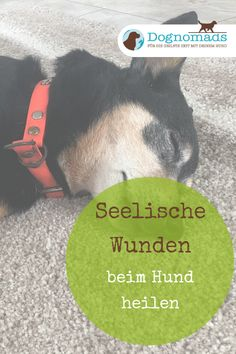 Was auch immer in der Vergangenheit Deines Hundes passiert ist – mit Star of Bet… Whatever happened in the past of your dog – with Star of Bethlehem you heal the wound Believe Quotes, Cesar Millan, Chinese Crested Dog, Pet Dogs, Pets, Star Of Bethlehem, Famous Last Words, Fitness Motivation Quotes, Best Self