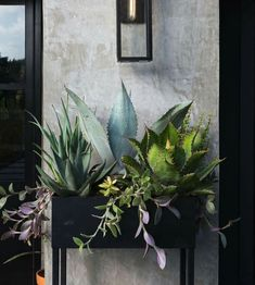 DIY planter box is a simple but effective medium to display your favorite plants. Here are some ideas you can try for your own garden or home. Indoor Vegetable Gardening, Indoor Garden, Indoor Plants, Indoor Cactus, Diy Planter Box, Diy Planters, Indoor Planter Box, Raised Planter, Window Planter Boxes