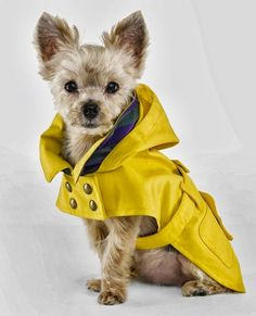 Dog Clothes - Ralph Lauren The Dog Walk Accessories and Dog Clothing Fall/Winter 2013 Chihuahua, Pet Clothes, Dog Clothing, Dog Raincoat, Dog Clothes Patterns, Pet Fashion, Luxury Fashion, Nail Fashion, Dog Sweaters