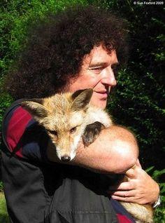 Brian May, fox