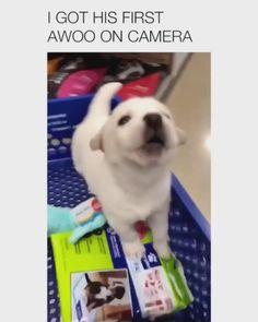 Cute Dog Memes, Funny Dog Jokes, Funny Animal Memes, Funny Animal Videos, Funny Dogs, Dog Videos, Cute Little Animals, Cute Funny Animals, Cute Cats