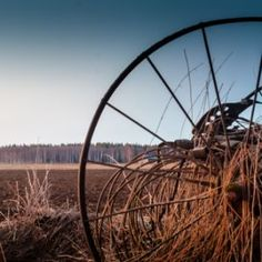 Old Wheel On The Fields