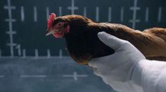 #Jaguar Makes Fun of Mercedes' Chicken #Commercial [Video]