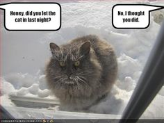 funny cats with captions | Funny photos of cats, cute cats pictures, funny cat caption pictures