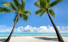 Download wallpapers ocean, tropical island, palms, beach, sand, sea, waves, travel concepts