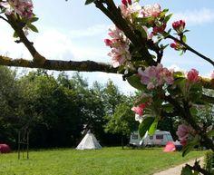 Campement sous les pommiers