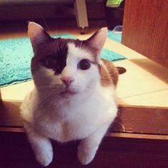 Даже Питер начинается с котов #кот #cat #猫 #stpetersburg #catoftheday #Аламакtanyuu1262016/02/11 16:03:08
