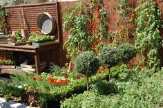Small Vegetable Garden Layout Ideas ** You can find more details by visiting the image link.