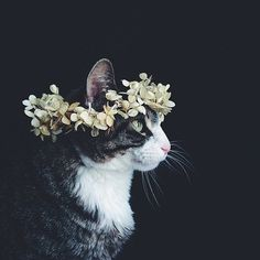 • cat beautiful hippie hipster stunning vintage indie Grunge kitten flowers connor franta tumblr worthy lifeismymiracle •
