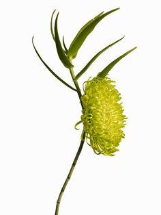 Makoto Azuma-modern flower arrangement