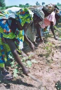Sudanese farmer Janes