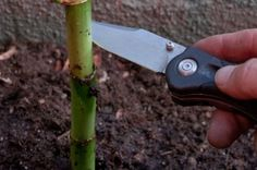 How to Transplant Bamboo Cuttings (with Pictures)