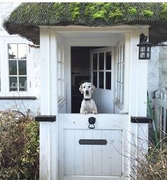I am obsessed with Dutch doors. I love the option to open a door from the kitchen and back patio. Dutch doors were popular in the northeast when the Dutch immigrated from the Netherlands (Holl… Door Entryway, Entrance Doors, Doorway, Architecture Unique, Back Doors, Exterior Doors, Stables, Cabana, Windows And Doors