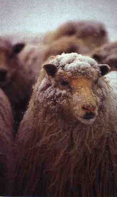 Please do not purchase wool from large companies.  they are there only to make money and do not care how cruel they are win clipping them!!!  See PETA for more information!!!! Only purchase from small loving people that love there animals!!!! Thank you