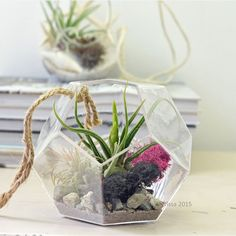Geometric Terrarium// Hanging Dodecahedron// by PinkSerissa