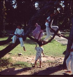 Sai Gon 1966 - Children play in zoo by Jon Madzelan