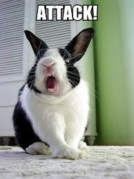 Aggression in rabbits. Its soo important to understand WHY your rabbit is behaving the way they are! Because animals always have reasons thats why i love them. Great article.