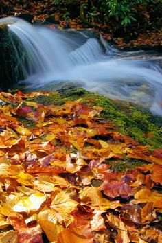 fallen leaves by a waterfall in the North Carolina mountains