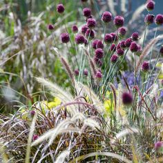 Eight plant combinations of grasses and flowers