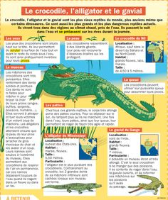 Educational infographic : Fiche exposés : Le crocodile lalligator et le gavial Flags Europe, Verb Conjugation, French Education, French Classroom, French Teacher, Science Biology, Crocodiles, French Lessons, Preschool Kindergarten