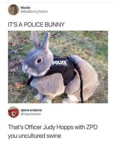 Top Funny Memes About Disney & Disney Memes Zootopia Funny Animal Jokes, Cute Funny Animals, Funny Cute, Top Funny, Really Funny Memes, Stupid Funny Memes, Funny Humor, Funny Stuff, Funny Things