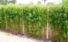 Weidenflechtwerk: Schneller Sichtschutz - Gartengestaltung - DAS HAUS