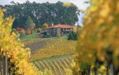 Vineyards at their best! Call to find the best locations to visit in Australia. Ask our experts on 800 641 8772