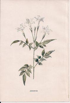 Original Victorian Chromolithograph Floral Picture by DevonArcadia, £11.59