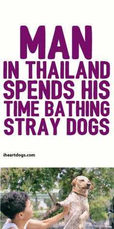 Main In Thailand Spends His Time Bathing Stray Dogs