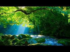 Soothing music to brighten up your day and beautiful nature scenery with cascades, lake and forest. Relaxing morning music and calming nature sounds to posit. Meditation Musik, Deep Meditation, Relaxing Gif, Relaxing Music, Calming Music, Nature Gif, Nature Music, Morning Music, Stress Relief Meditation